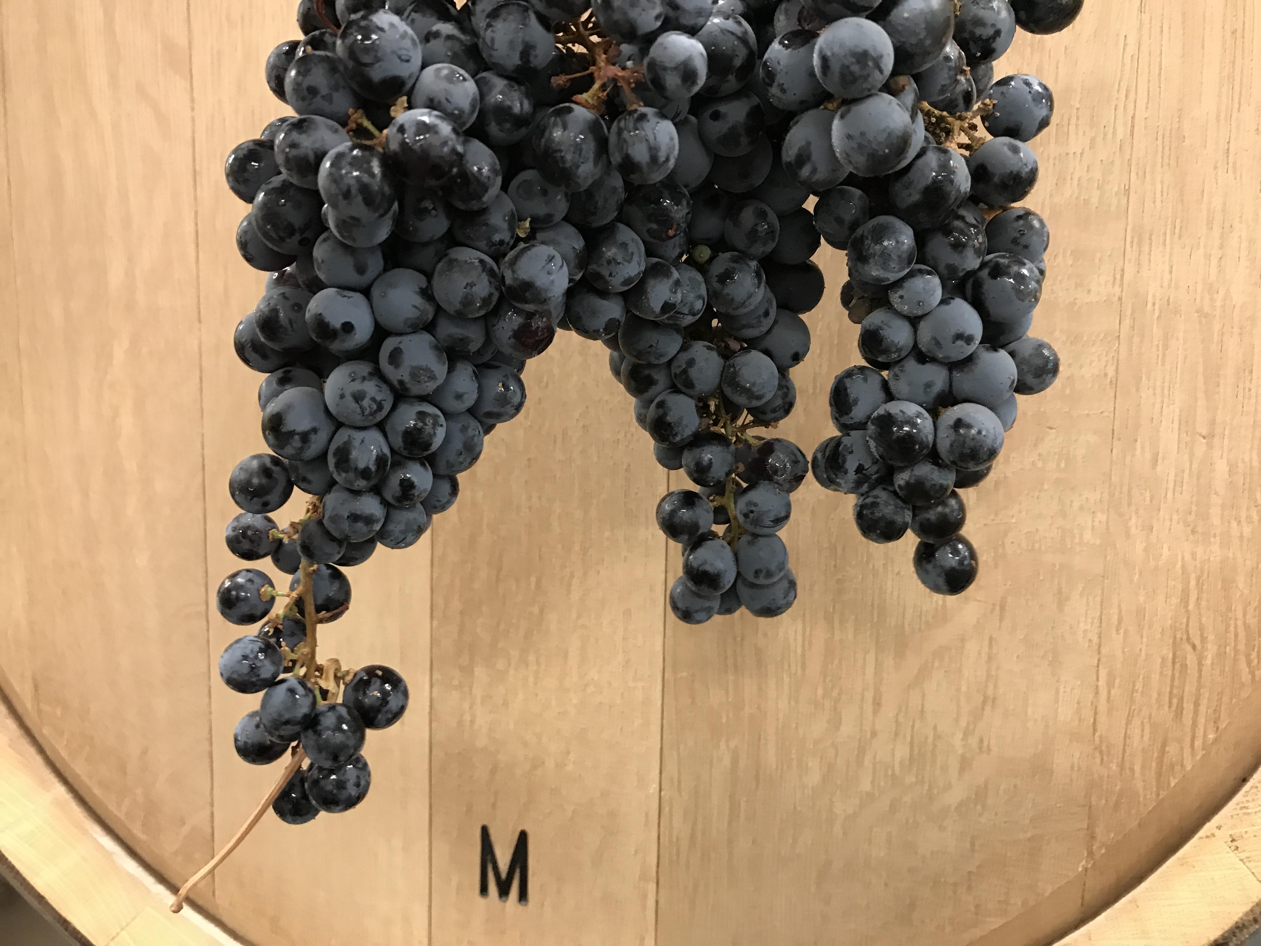 Crush Day – Cabernet Sauvignon